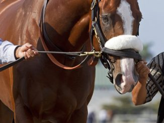 horse racing definitions